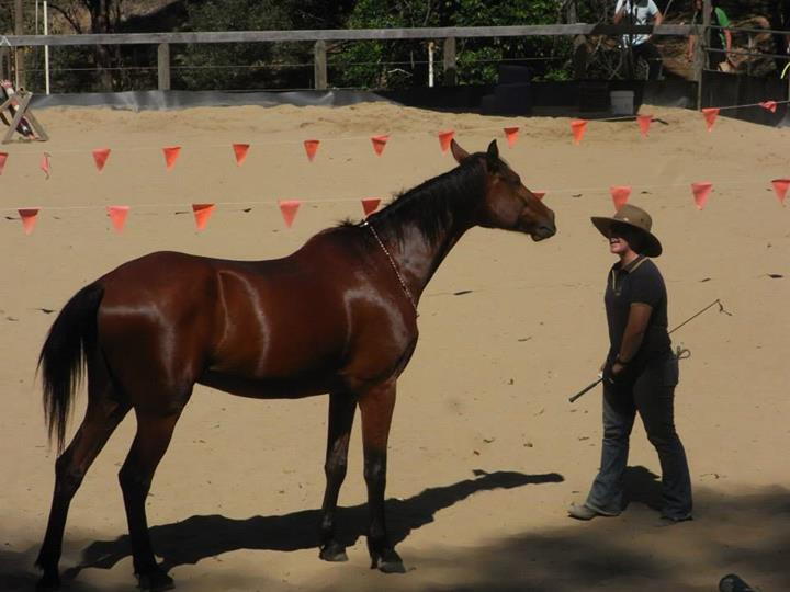 Horse connection demonstration